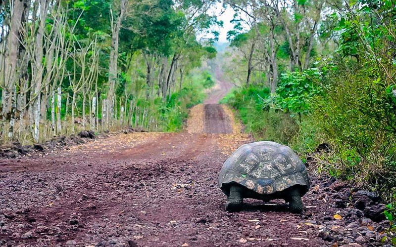 tortoise airport galapagos ecuador transfer vacations travel tours