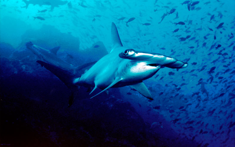 shark week cruise galapagos ecuador endemic vacation travel