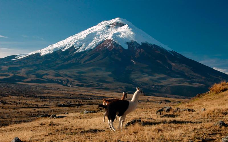 cotopaxi ecuador highlands
