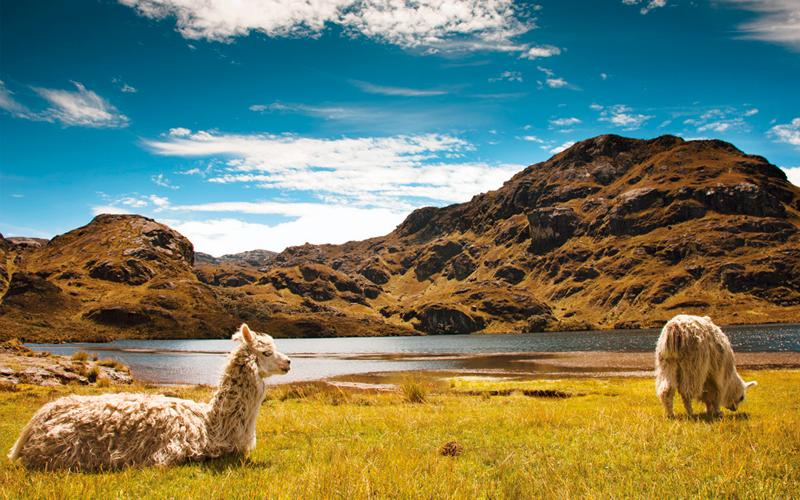 cuenca cajas ecuador highlands