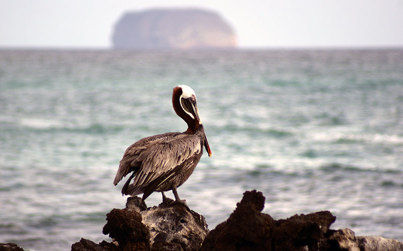 galapagos-hotels-vatations-travel-ecuador-tours