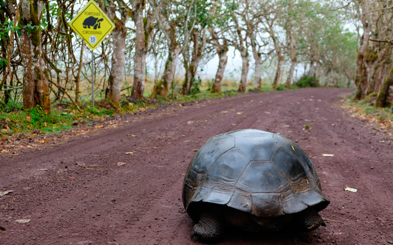 15 fascinating facts about galapagos world heritage