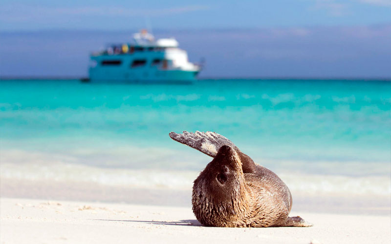 sealion greeting cruise galapagos ecuador endemic vacation travel
