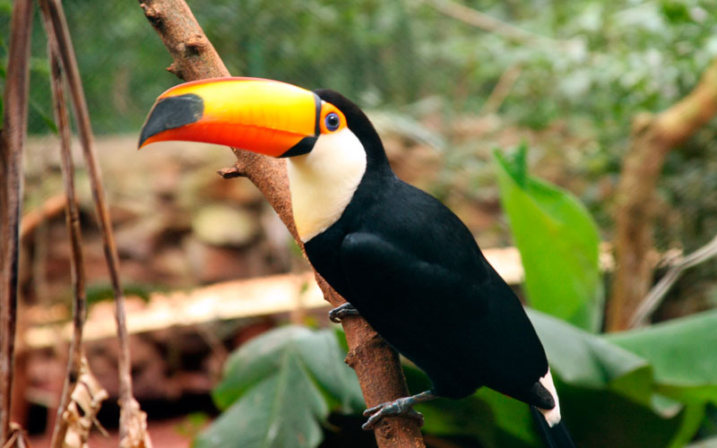 toucan-amazon-jungle-ecuador-galapagos-islands