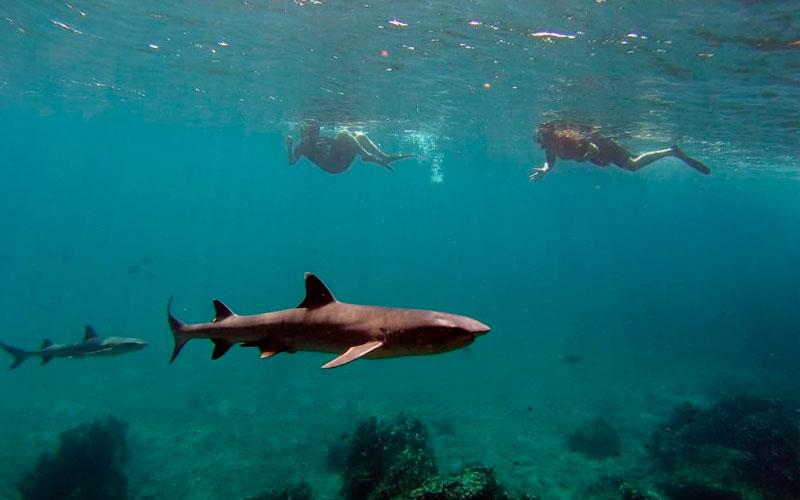 galapagos shark diving underwater marine life ecuador hotels travel adventure