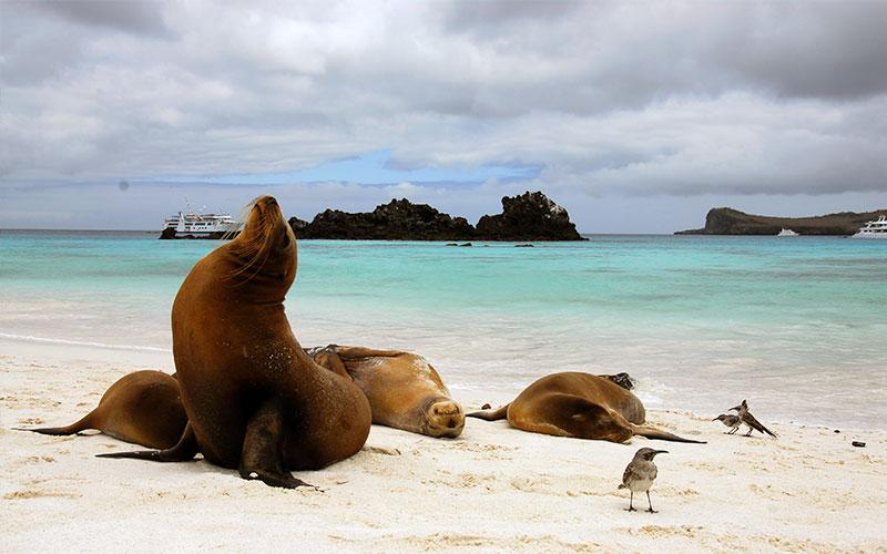 gardner bay espanola island galapagos travel vacations