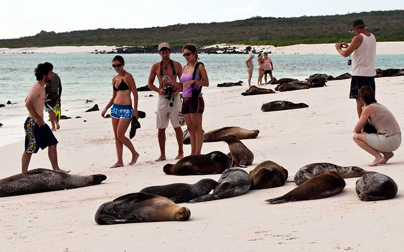 sealions galapagos beach wildlife travel vacations