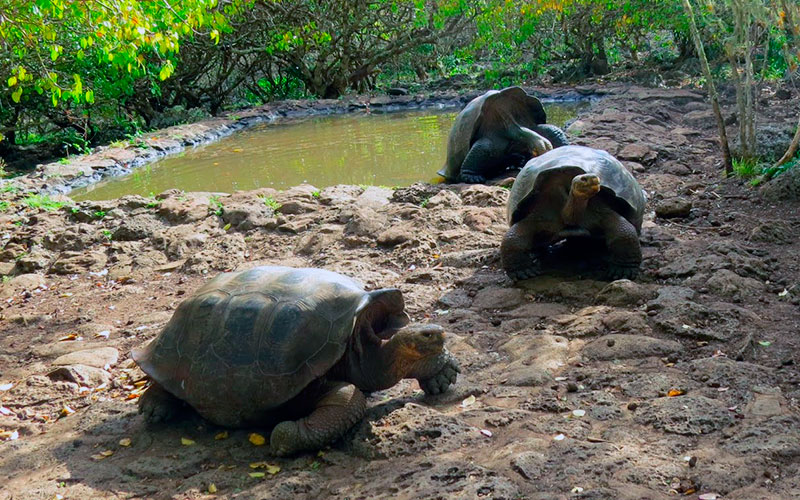 charles darwin station tortoise galapagos program travel vacations wildlife conservancy