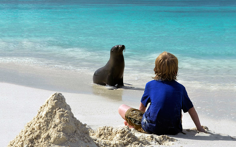 galapagos hotels cruises sealion photography travel tours