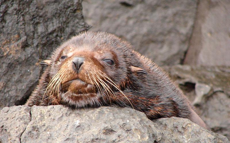 fur seal galapagos hotels cruises travel tours vacations