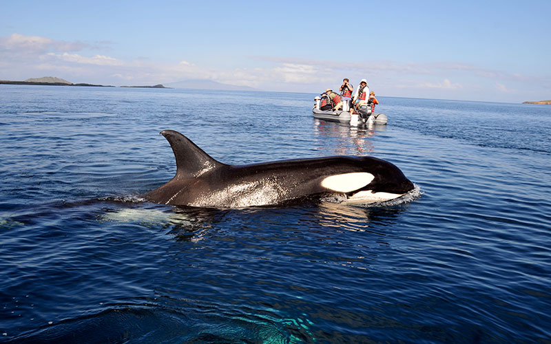 galapagos mammals orca whale hotels cruises vacations travel