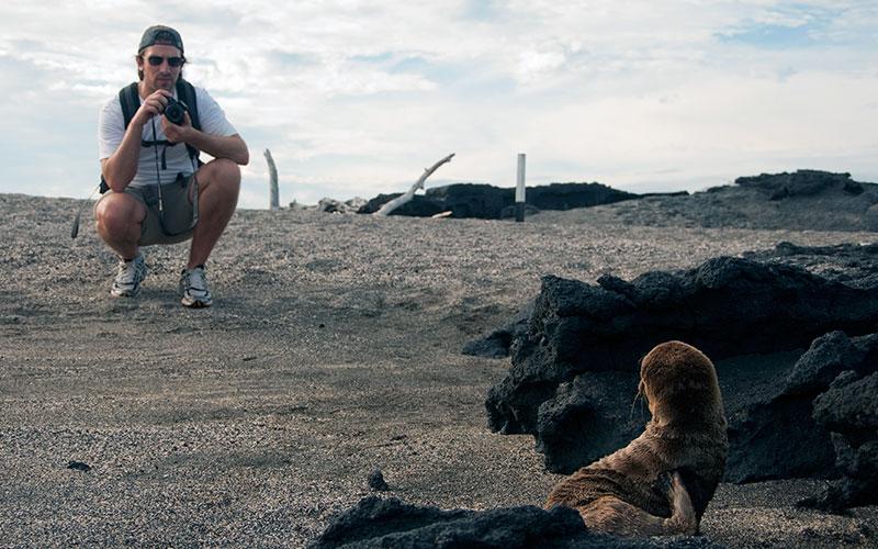 galapagos mammals sealion beach photography