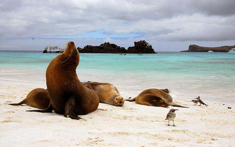 sealion galapagos-ecuador hotels cruises travel vacations