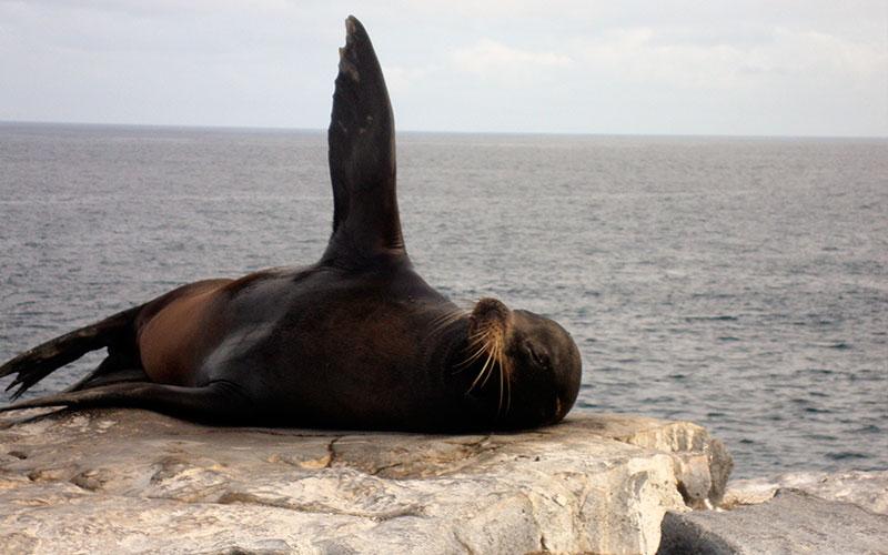 sealion galapagos hotels cruises vacations travel wildlife ecuador