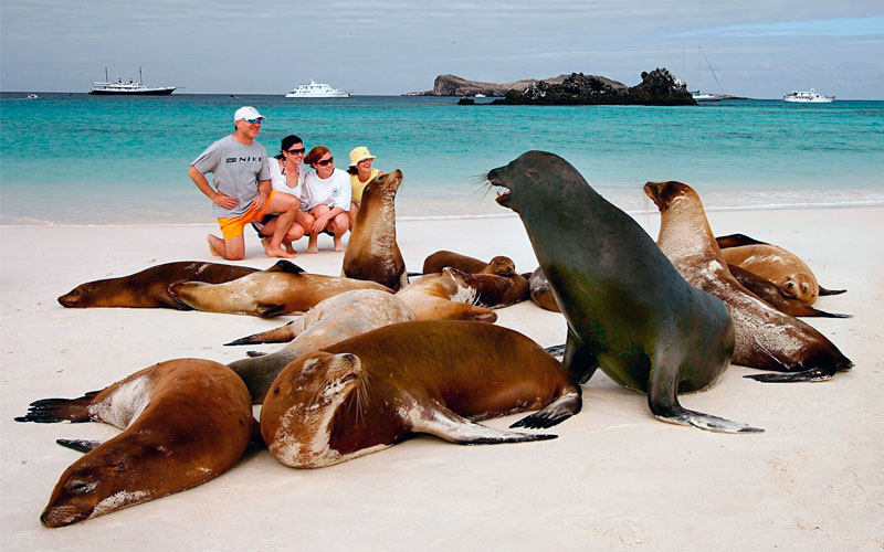 sealion galapagos family vacation travel tour ecuador galapagosislands