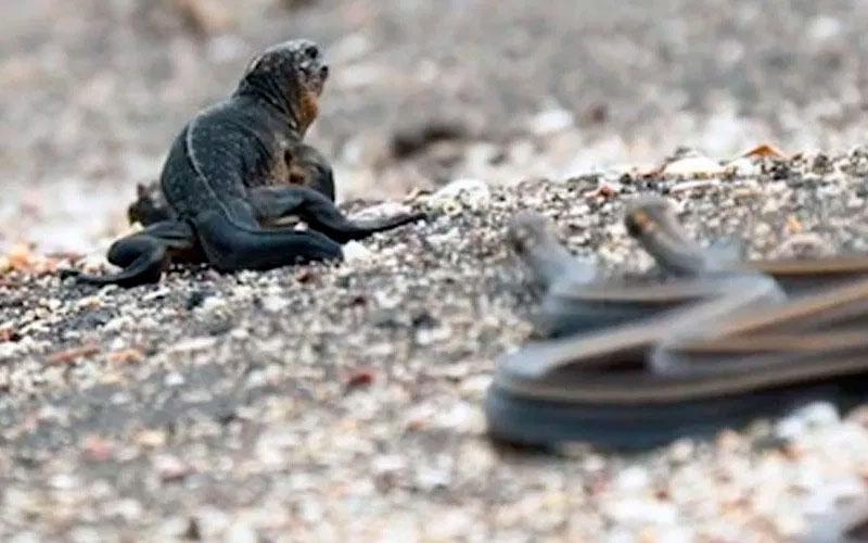 racer snake galapagos snake ecuador travel vacation tour