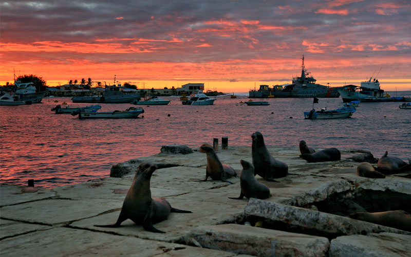 sealion cruises sea sunset galapagos ecuador travel vacations tours wildlife