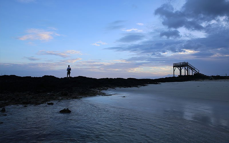 sealion cruises sea sunset galapagos ecuador travel vacations tours wildlife