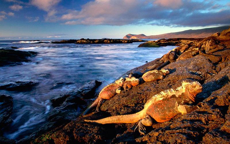 iguana fernandina tourism galapagos islands ecuador travel tour history