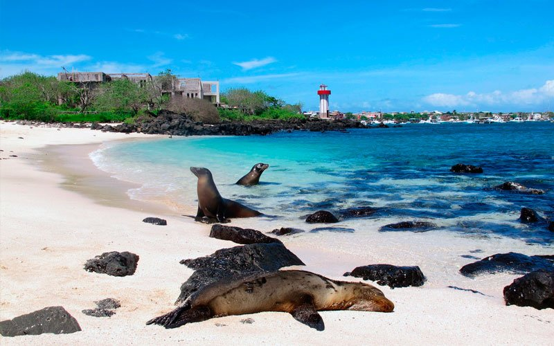 sea lion playa mann tourism galapagos islands ecuador travel tour
