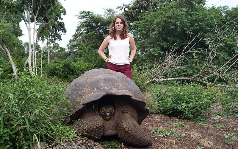 giant tortoise warm- season beach best time galapagos sky summer vacation travel summer winter ecuador galapagos islands