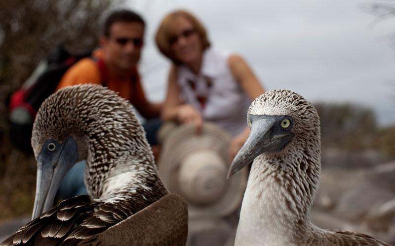 blue footed booby galapagos birds ecuador galapagosislands wildlife birdwatching