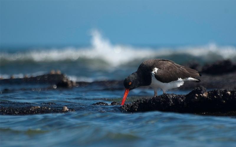 galapagos islands birds