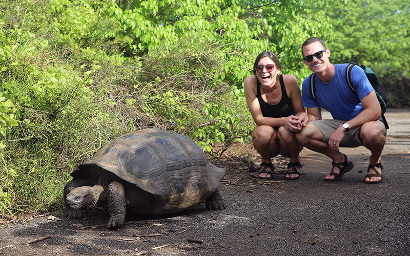 honeymoon in galapagos tortoise