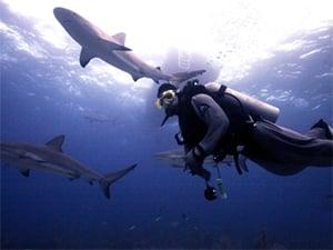 divers & sharks