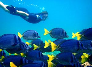 Galapagos Islands Scuba Diving