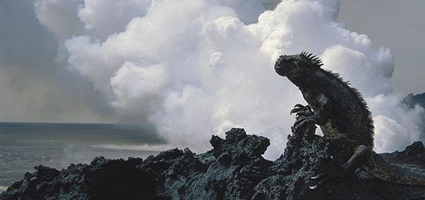 iguana volcanic island