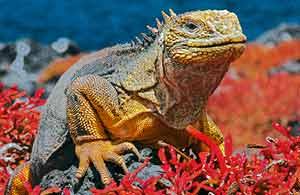 Galapagos Reptiles