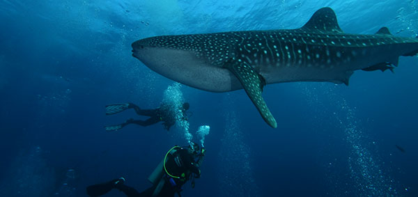 Galapagos underwater world