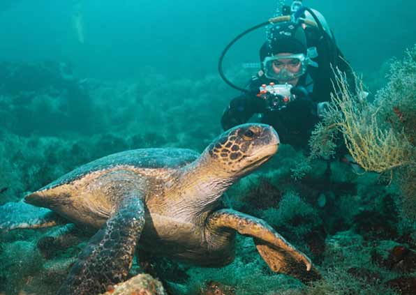 Diving in Galapagos