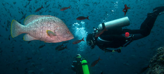 Island Hopping Diving Tour