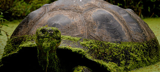 The Giant Tortoise Trail