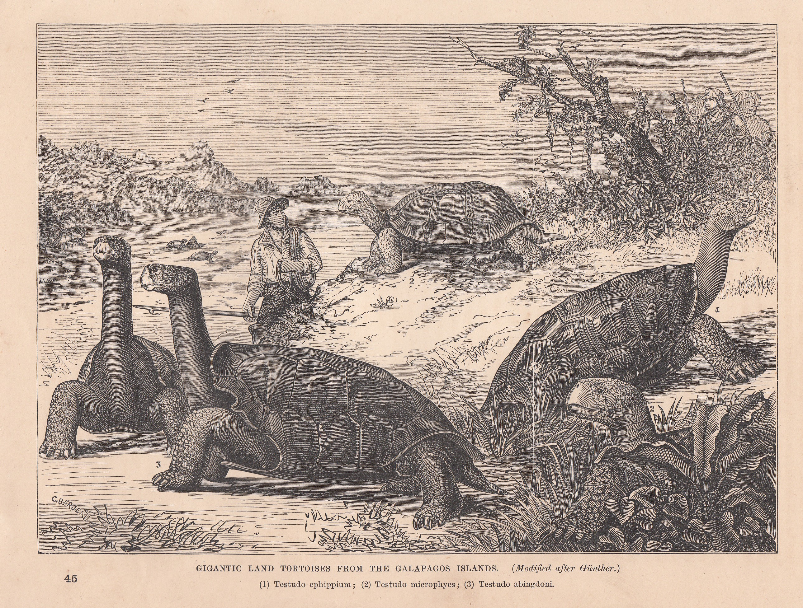 the history of the galapagos islands The galapagos consist of 13 major islands (ranging in area from 54 to 1771   groundbreaking theories on natural selection presented in his on the origin of.